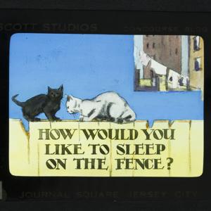 How Would You Like To Sleep On The Fence_19.jpg