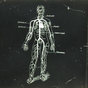 Human Circulatory System_84.jpg